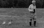 Konrad Lorenz na procházce s husami